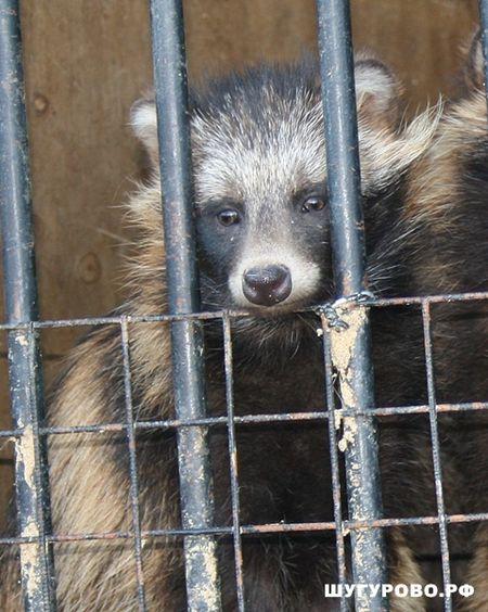 В Шугурово приезжал зоопарк