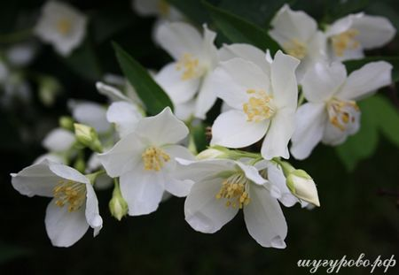Природа Шугурово