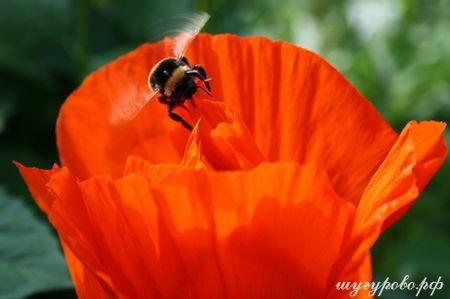 Природа Шугурово, цветы