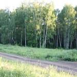 Природа Шугурово 2013 (3)