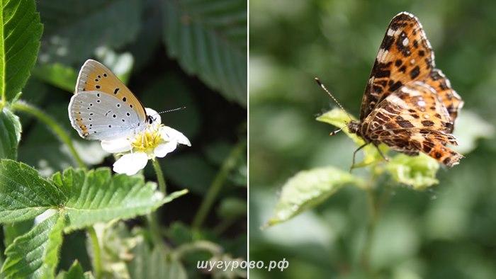 природа_2012_2