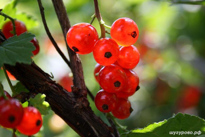 природа_2012