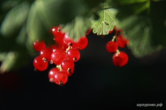 природа_2014