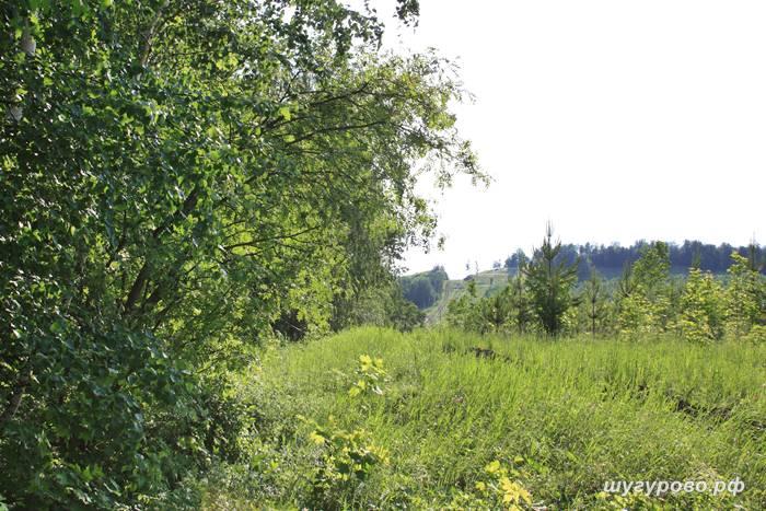 природа шугурово 2015