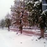 7 октября выпал первый снег