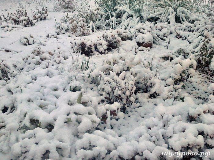 шугурово снег
